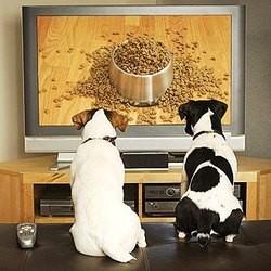 dog tv chaine télé chiens