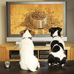 http://static.wamiz.fr/images/news/medium/dog-tv-chaine-tele-chiens.jpg