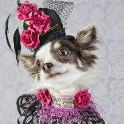 vêtements chiens haute couture