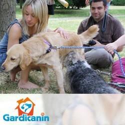 dog dating wamiz Gardicanin
