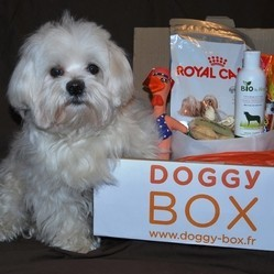 concours doggy box chien
