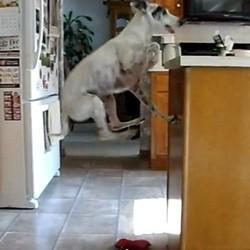 un chien affamé saute sans s'arrêter