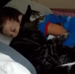 Chat et garçon