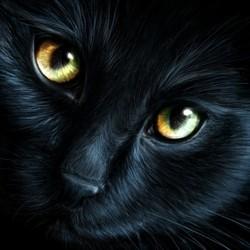 douglas chat noir voyage australie