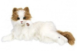chat dream cat venus