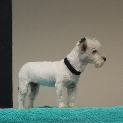 animal expo chien idéfix