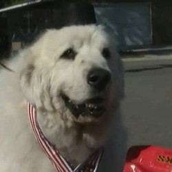 un chien élu maire