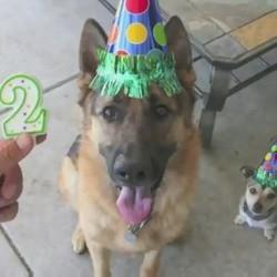 anniversaire chien vie résumée en photos