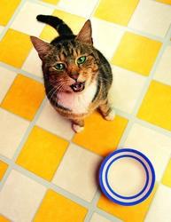 chat faim nourriture