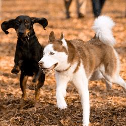 chien jouant
