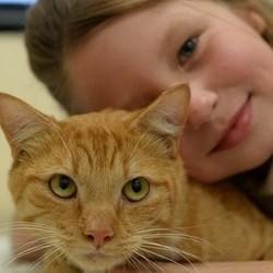 une petite fille et son chat