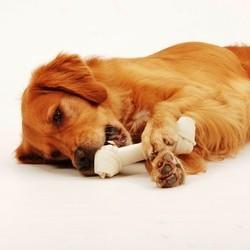 echantillon os friandise chien 8in1