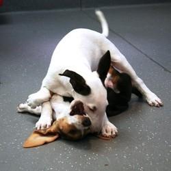 ecole du chiot education du chien