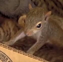 écureuil et chats