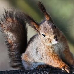 Connaître et prend soin de son écureuil de compagnie