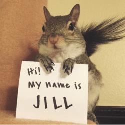 jill écureuil