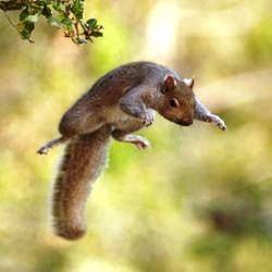 écureuil qui fait des montagnes russes