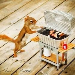 un écureuil se prend pour un humain