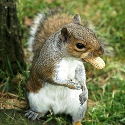 ecureuil magasin morrisons