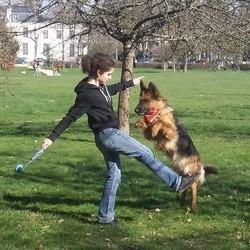 éducation canine obéissance rythmée