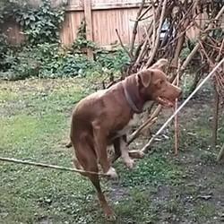 éducation chien tours équilibre