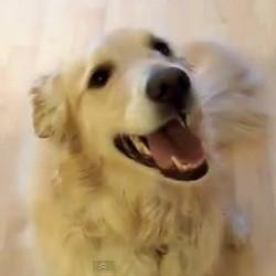 chien range jouets education video