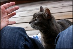 éduquer son chat