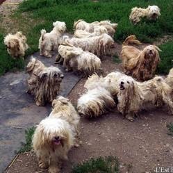 elevage chien clandestin meuse