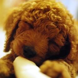 chiots chiens elevage clandestin besançon spa