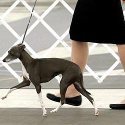 Sept comportements qui exaspèrent les vétérinaires