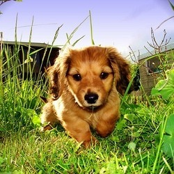 empoisonnement chien toxique