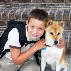 empoisonnement chien antigel loi nikko