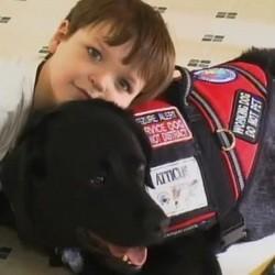chien d'accompagnement secours enfant autiste
