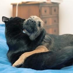 cout d'un chien assurance animaux