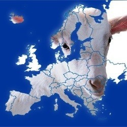 élections européennes cause animale
