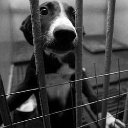 euthanasie chien fourrière cruauté animale