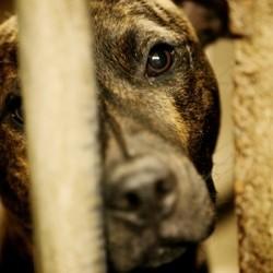 euthanasie chiens refuge roumanie