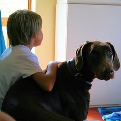 eviter morsure chien enfant