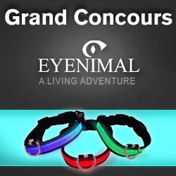 concours collier lumineux pour chien eyenimal