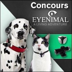 concours caméras eyenimal