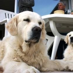 faire garder chien vacances