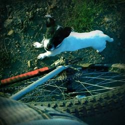 velo chien montagne sport canin