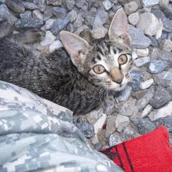 felix chaton orphelin en afghanistan