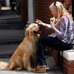 une femme parle à son chien