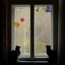 Chats devant la tempête