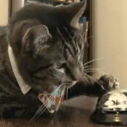 festival de vidéos de chats