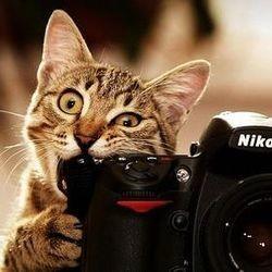 festival videos de chats