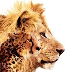 film felins lion disney
