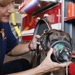 chien avec masque à gaz
