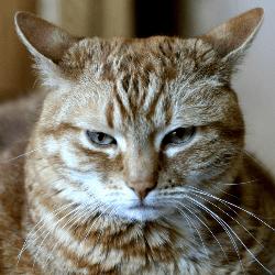 Chat grognon